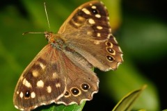 butterfly-forest-board-game-macro-insect-51424